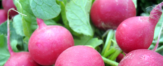 It Starts With Radishes
