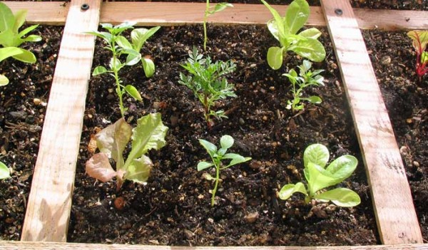 How to Start a Garden: Now There Are NO Excuses