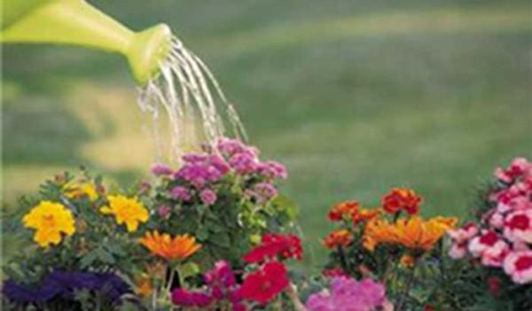 Gardening Quotations