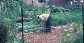 Community Garden in Philadelphia