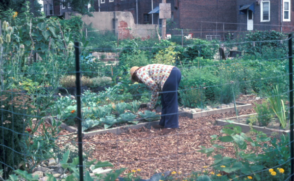 Start A Community Garden Now Mel Bartholomew Creator
