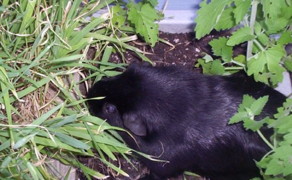Gardening with Pets and Pests