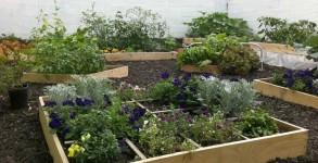 Vic's-Garden--5612