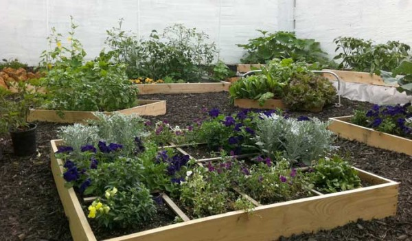 Victoria's First Garden in S.C.