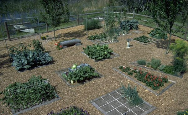 How I Came Up With Square Foot Gardening Mel Bartholomew Creator