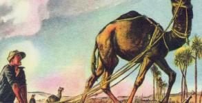 gardening-humor-camel