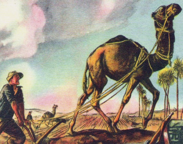 Gardening Humor: Camels and Backbreaking Work!