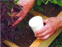 Square Foot Gardening Water