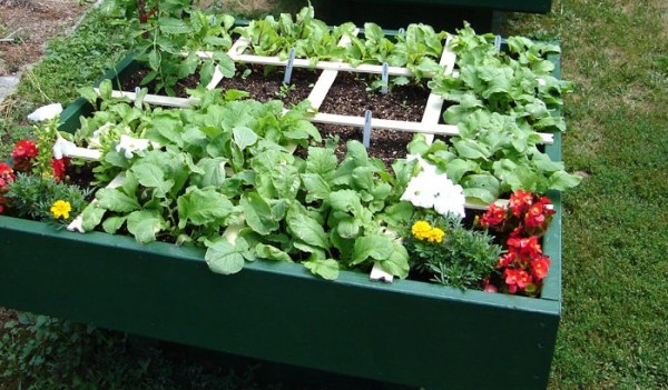 All The Basics Of Square Foot Gardening
